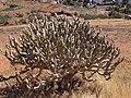 Betancuria, 35637, Las Palmas, Spain - panoramio (159).jpg