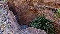 Biosphere Reserve La Gomera 23.jpg