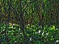 Biotope Lake of Gargazzone - Photo by Giovanni Ussi - Lake and surrounding vegetation (1) 34.jpg