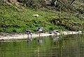 Birds from Nepal at Chitwan (13).jpg