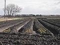 Black earth, Drummersdale Lane - geograph.org.uk - 1773705.jpg