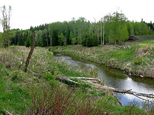 English: Blindman River, near Rimbey, Alberta