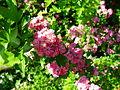 Blossoms 7.JPG