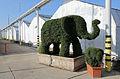 Blumengärten Hirschstetten Wien 2014 Busch-Elefanten b.jpg