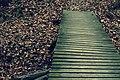 Boardwalk IMG 0068 (8309663454).jpg