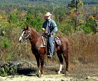 Mountain Pleasure Horse - A Mountain Pleasure Horse under saddle.