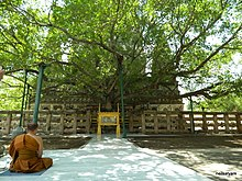 Monk meditating in front of a large tree, with an ancient monument behind it.