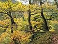 Bois autour de la cascade du Nideck, Alsace.jpg