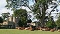 Bolton Abbey - panoramio (1).jpg