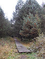Borkovické blata -Stezka s chodníčkem.jpg