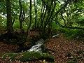Bosahan Woods - geograph.org.uk - 1611354.jpg