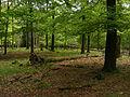 Bosgebied met matige ondergroei in Nationaal Park Veluwezoom2.JPG