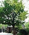 Botanic Gardens gatehouse - geograph.org.uk - 423925.jpg