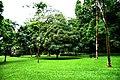 Botanic garden limbe70.jpg