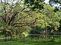 Botanical Garden in the afternoon.jpg