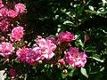Botanical garden in zugdidi(flower).jpg
