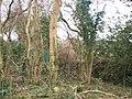 Bottom of Llanteg Old School Garden - geograph.org.uk - 1179716.jpg