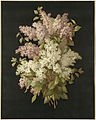 Bouquet of Lilacs by Boston Public Library.jpg