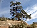 Boynton Canyon Trail, Sedona, Arizona - panoramio (115).jpg