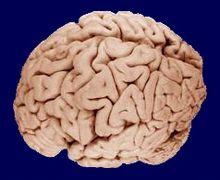 Чипсы вызывают необратимые изменения в мозге
