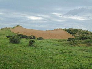 Braunton Burrows - Image: Braunton Burrows dune