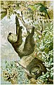 Brehms Tierleben; allgemeine kunde des thierreichs. Mit 1910 abbildungen im text, 11 karten und 180 tafeln in farbendruck und holzschnitt. (1893) (19790399294).jpg