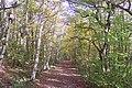 Bridleway in Blean Wood (1) - geograph.org.uk - 1559197.jpg