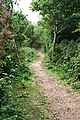 Bridleway through Cusveorth Coombe - geograph.org.uk - 846215.jpg