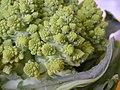 Broccoli DSCN4357.jpg