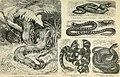 Brockhaus' Konversations-Lexikon (1892) (14804455863).jpg