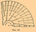 Brockhaus and Efron Encyclopedic Dictionary b37 063-2.jpg
