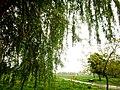 Brody, Lviv Oblast, Ukraine - panoramio (262).jpg