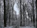 Buchholzer Forst 29.JPG