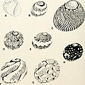 Bulletins of American paleontology (2001) (20502666985).jpg