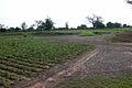 BurkinaFaso Agriculture.jpg