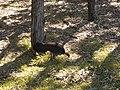 Bush Turkey.jpg