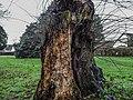 Bushy Park, Dublin -146502 (45754760364).jpg