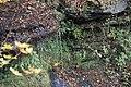 Buttermilk Falls - panoramio (20).jpg