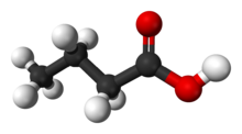 Space filling model of butyric acid