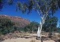 CSIRO ScienceImage 1743 Australian Landscape.jpg