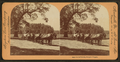 California Freight Wagon. (no. 9473), from Robert N. Dennis collection of stereoscopic views.png
