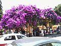 Calles y sitios de interés en el centro de Coatepec, estado de Veracruz. 18.jpg