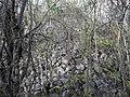 Calotmul (Yaxkukul), Yucatán (25).jpg