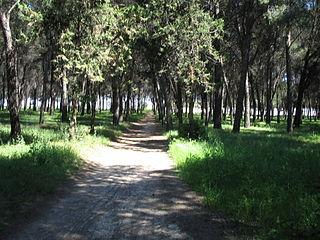 Camino en el Cerro de los Ángeles.jpg