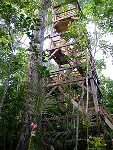 A large wooden staircase in a tower-shaped wooden frame climbs into the canopy, leading to a canopy walkway.
