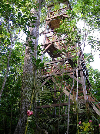 Seacology - The canopy walkway in Falealupo (seen from its base) is a popular tourist attraction and has helped the community generate revenue.