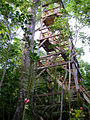Canopy walkway tower in Falealupo.jpg