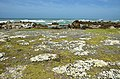 Cape Agulhas - na Střelkovém mysu - panoramio.jpg