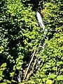Cascade du Tempa. (1). Corravillers.jpg