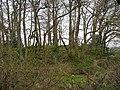 Castell Nant-y-garau - geograph.org.uk - 772359.jpg